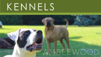 Dog Kennels Link-Box